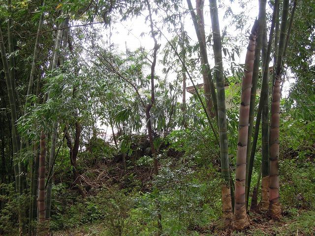 20120801パレス竹