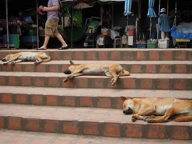 20120801三匹の犬
