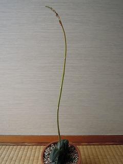 20130602-1