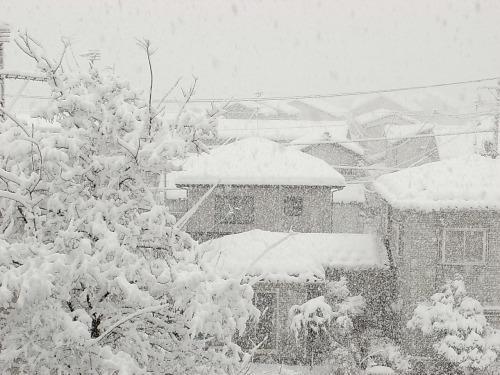 20091218雪1