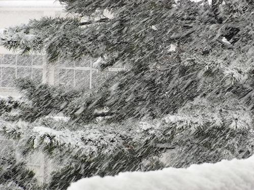 20091218雪2