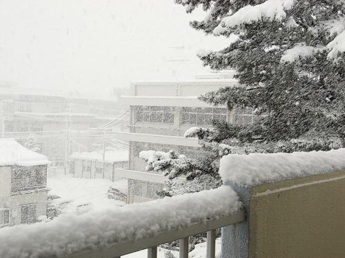 20091218雪3